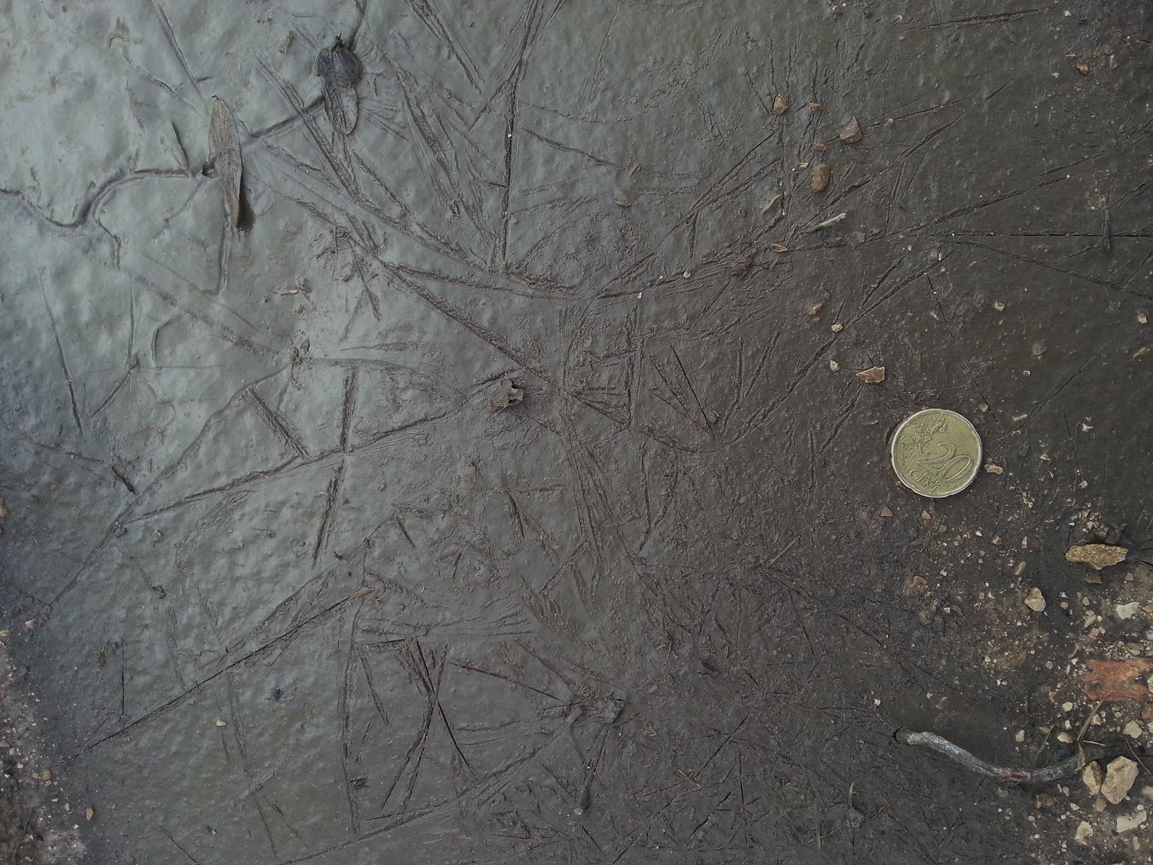 Ces traces ont été laissées par