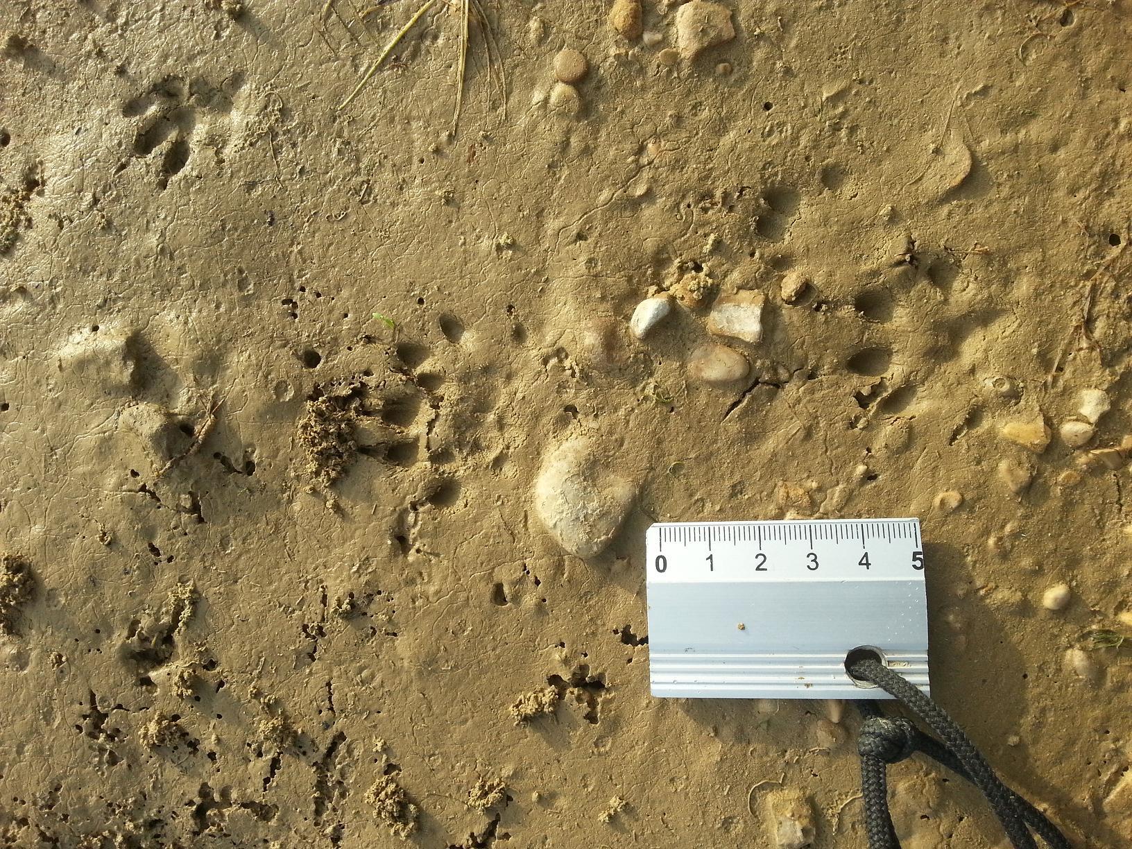 Deux animaux ont laissé ces traces au bord d'un lac