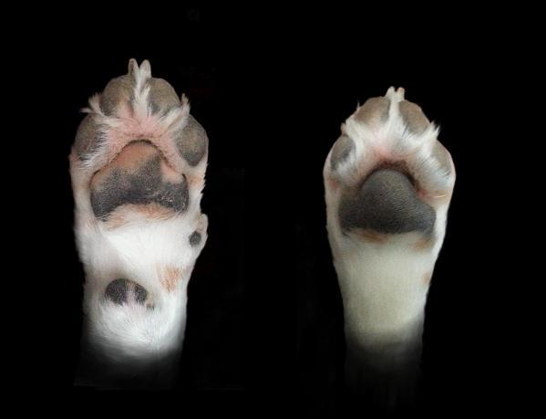 Les pattes du chien