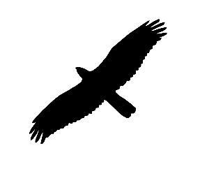 Cet oiseau est une buse variable