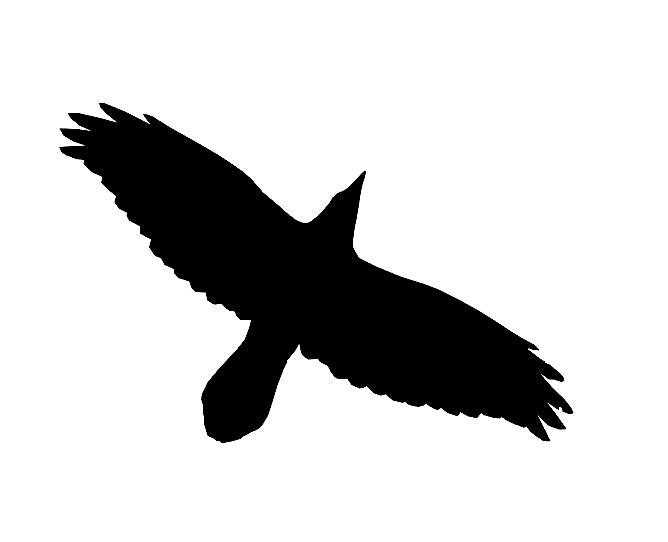 Cet oiseau est