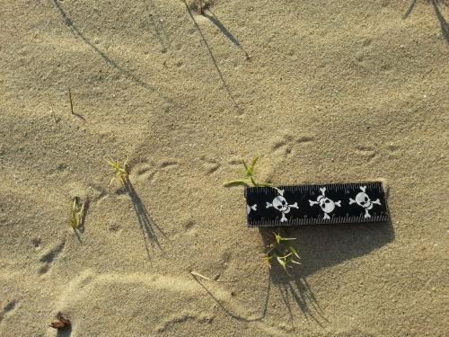 Piste de l'oiseau dans le sable
