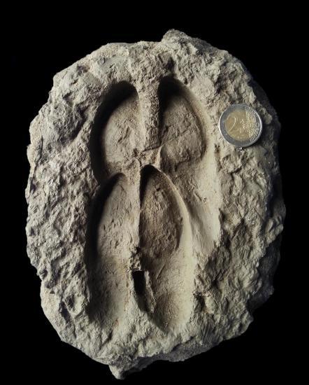 Impression de pieds de cerf