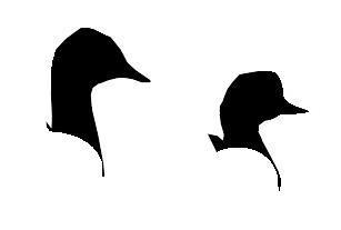 Parmi ces deux têtes de grèbe (esclavon et à cou noir), le grèbe esclavon est