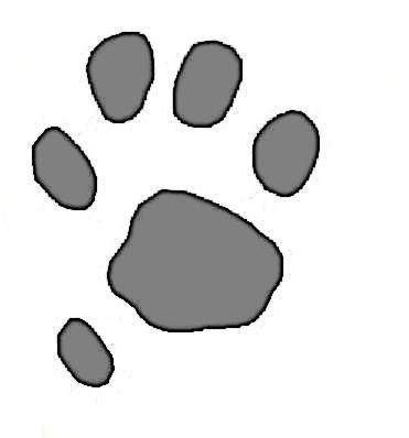 ...du chat forestier.
