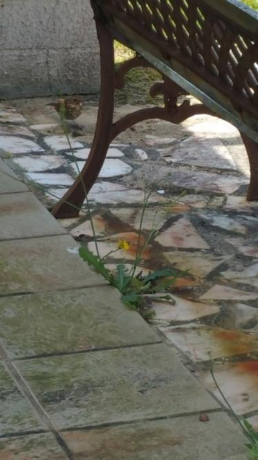 Grive sur terrasse