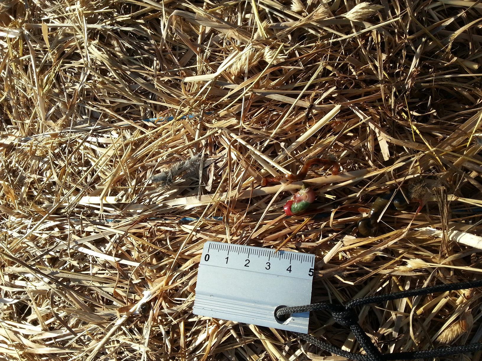 Ces indices trouvés au sommet d'une meule de foin sont