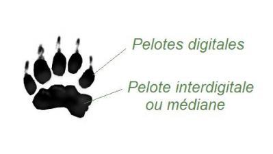 Pelote digitale