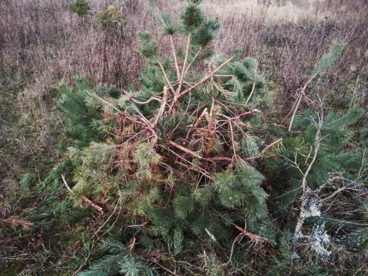 Jeune arbre fracassé
