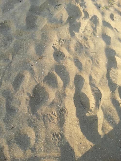 Bonds de la martre dans le sable