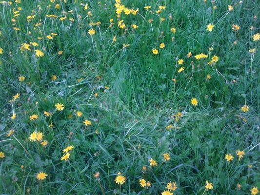 Coulée dans les herbes