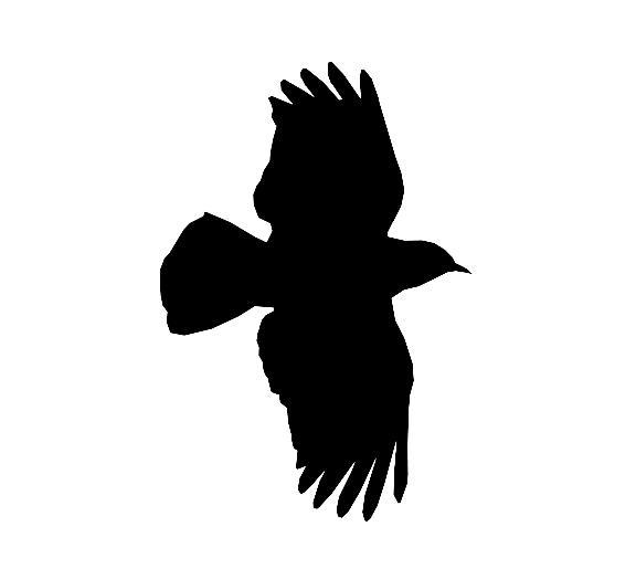 Cet oiseau en vol est